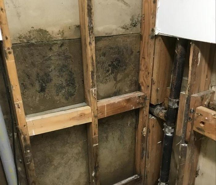 Helping to Save Your Tarzana or Reseda Property From Mold Before