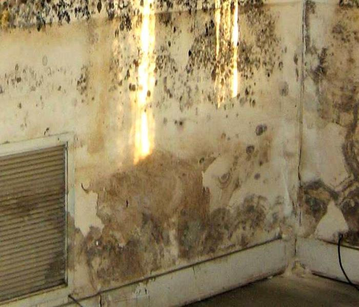 Mold Cleanup is more than you might think