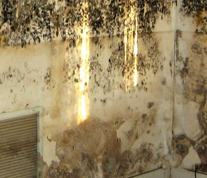 Mold Remediation Why You Need to Choose SERVPRO for Mold Remediation