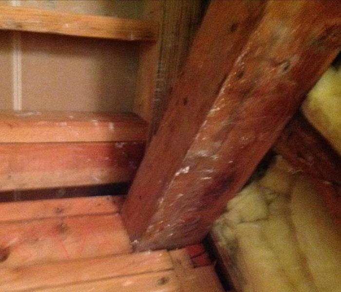 Mold Remediation Taking the steps to get rid of mold Los Angeles