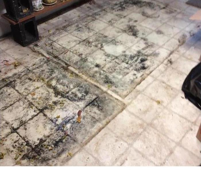 mold growing on floor tile